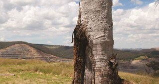 Aboriginal Prehistory